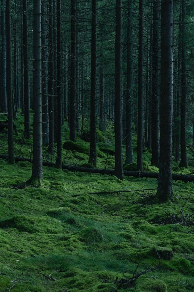 A moss and grass covered forest floor. Thin, bare trees are dotted around